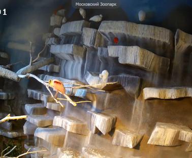 Московский зоопарк. Веб камера онлайн околоводные птицы